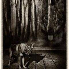 """""""Come Cani & Gatti"""""""