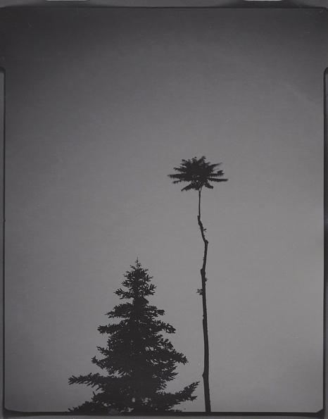 Portrait of Trees